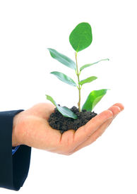 stock photo of environmentally friendly  - hand of male holding growth plant - JPG
