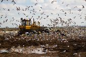 stock photo of bulldozers  - Shot of bulldozers working a landfill site - JPG