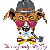 stock photo of greyhounds  - hipster Greyhound Dog in a hat glasses and bow tie with tobacco pipe - JPG