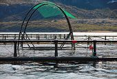 Fish Farm Cages For Salmon Growing In Norwegian Sea