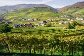 Vine Hills in Lower Austria