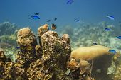 Small Fish Colony
