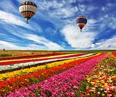 Great multicolored rural field with flowers.  Over field flies the huge air balloon