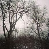 Gloomy Trees Against Cloudy Sky