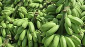 Pile Of Green Banana Called Kluay Khai