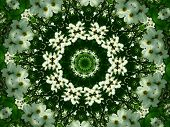 foto of dogwood  - Kaleidoscope of Dogwood blossom and greenery in a circular pattern - JPG