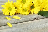 picture of chrysanthemum  - Yellow chrysanthemum on wooden background - JPG