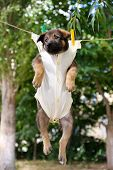 Puppy dressed in clothes for children and hung on the rope with clothes-pegs outdoor