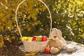 plush bunny with basket of apples on a background of yellow leaves