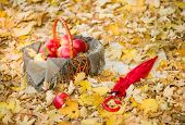 basket with apples and umbrella on autumn leaves