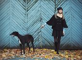Young Attractive Girl Dressed Elegantly Walks With The Dog Greyhound
