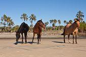 herd of wild horses on a tropical beach