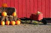 Pumpkins And Hay With Wheelbarrow
