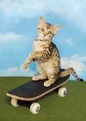 Kitten On A Board