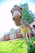 foto of horses ass  - Donkey closeup portrait in sunny day - JPG