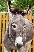 Donkey closeup portrait in sunny day