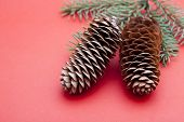 pine cones on red background.