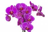 Beautiful violet orchid on a branch