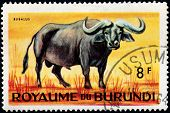Bubalus Stamp