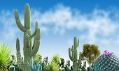 image of ocotillo  - Desert wild nature landscape with blue sky background - JPG