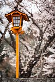 Sakura Lantern