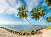 Palms on the white beach and a turquoise sea on a Caribbean island of Barbados. Panorama