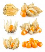 set of 6 physalis images