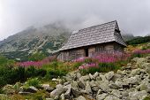 Mountain wooden hut