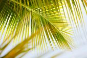 Close up of a fresh green palm tree leaves
