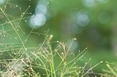 Grassy Seed Background