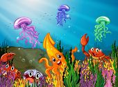 image of aquatic animal  - Illustration of many sea animals underwater - JPG