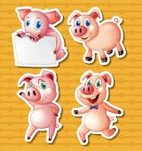 Illustration of many pigs with background