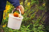 Man hand holding Mushroom pail fresh picked organic food