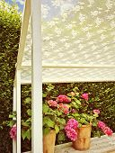stock photo of gardenia  - Sunny summer veranda with pink blooming gardenias.
