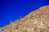Cactus Hill In Bolivia