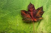 Autumn leaf on green wall background