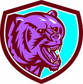 image of growl  - Illustration of a grizzly bear head angry growling set inside shield crest on isolated background done in retro style - JPG