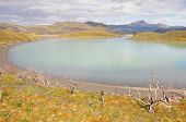 image of pain-tree  - Lake of Torres del Paine National park - JPG