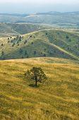 image of prairie  - Prairie path through hillsides with dry vegetation - JPG