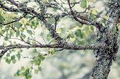 picture of lichenes  - Lichen on tree in forest close - JPG