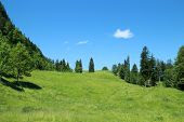 stock photo of tramp  - field in the austrian alps on a summer day - JPG