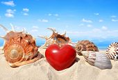 image of conch  - Conch shells with heart on beach  - JPG