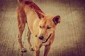 foto of homeless  - Brown homeless Thai dog on side street Vintage retro tone - JPG