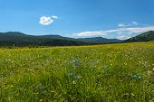 foto of cloud forest  - Beautiful mountain landscape with wild flowers in the meadow on a background of mountains forest and blue sky with clouds - JPG