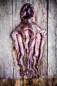 picture of sucker-fish  - whole fresh raw octopus on a rustic wooden table - JPG