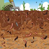 picture of loam  - Editable vector illustration of earthworms in garden soil - JPG
