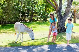 foto of wild donkey  - Family of mother and kids outdoors looking at wild donkeys on beautiful summer day - JPG