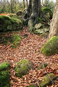 Roots of a beech and rock