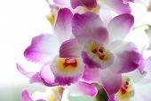 Постер, плакат: Орхидея красивой подсветкой