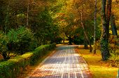 paved lane in a city garden in surroundings trees in autumn